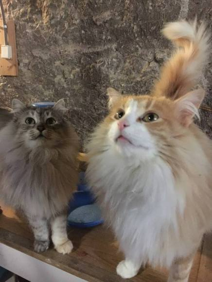 the-cats